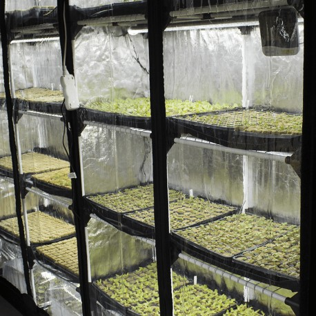Rychlá výsadba ECO - sada pro klíčení, řízkování a pěstování microgreens
