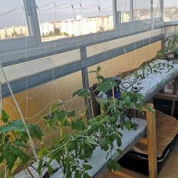 Set hydroponie na balkon pro pěstování zeleniny - 2 truhlíky