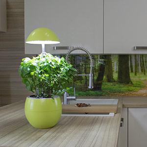 Blog o pěstování bylinek v kuchyni a rostlin v interiéru