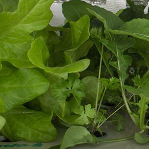 Blog o hydroponickém pěstování na zahradě, ve skleníku i indoor zahradě
