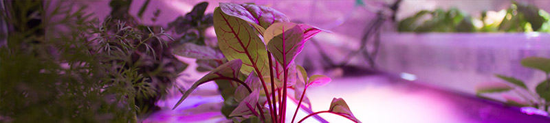 Postav si v bytě hydroponickou zahradu