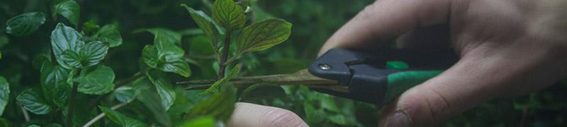 Příslušenství k hydroponickým zahradám pro celoroční pěstování bylinek v bytě
