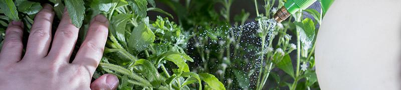 Prostředky pro boj se škůdci na rostlinách