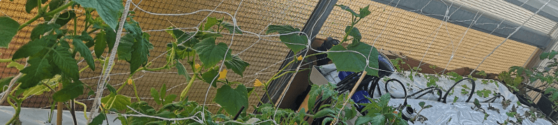 Kompletní sady pro pěstování zeleniny na balkonu hydroponicky