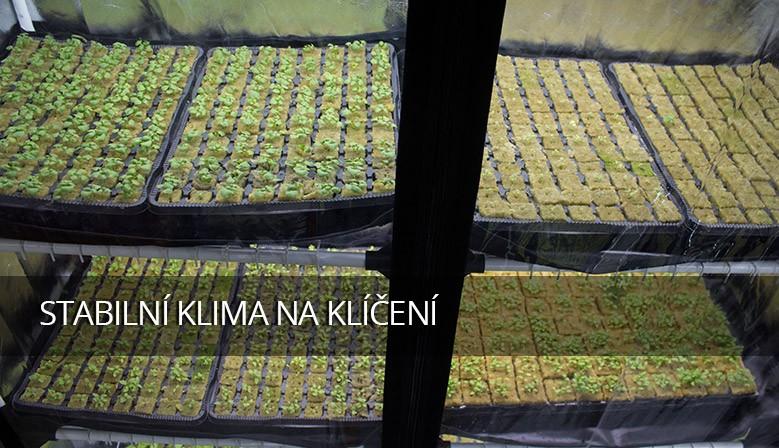 Pokud chcete s jarní výsadbou opravdu uspět, stabilní klima je zásadní výhoda
