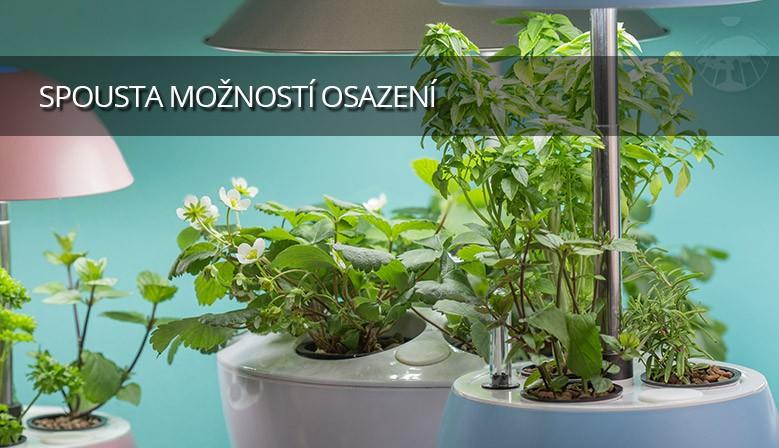 Pěstujte oblíbené bylinky v kuchyni